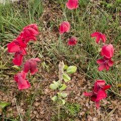 infiorescenze da fiori smontati