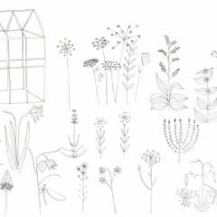 Il giardino inventato, illustrazioni da colorare